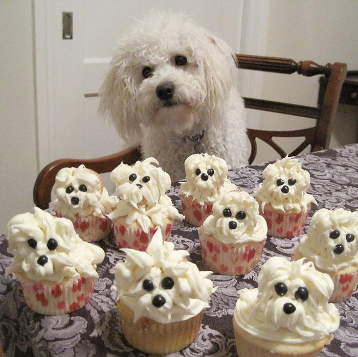 ТОП-13 тварин-іменинників, які святкують день народження веселіше за тебе - фото 13