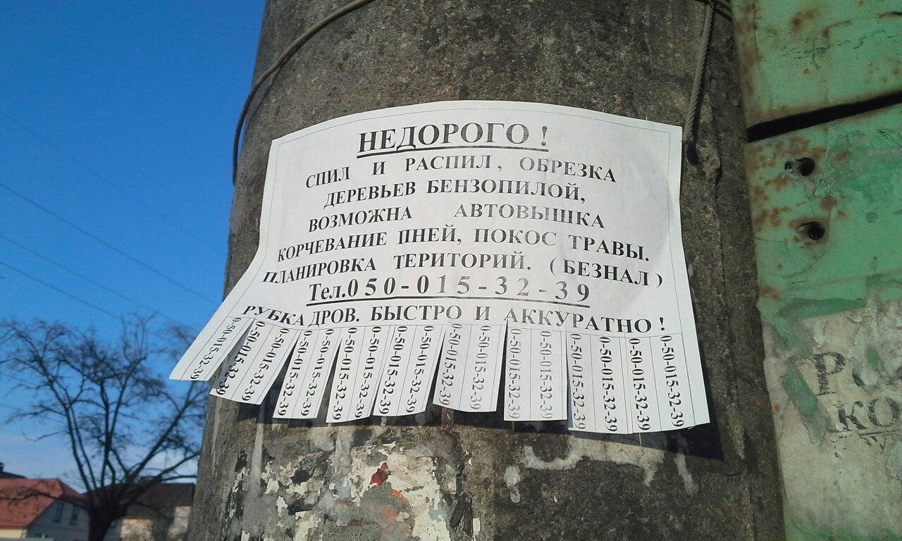 У Миколаєві під виглядом кронування дерева пиляють на дрова - фото 6