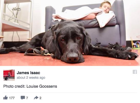 Як хлопчик, який ні з ким не говорить, лежав у лікарні з собакою  - фото 3