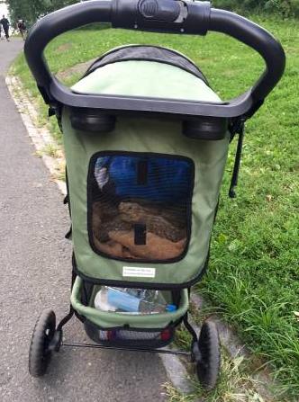 Любов це: коли ти возиш черепаху у дитячому візочку - фото 1