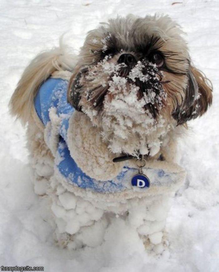 Холод собачий: ТОП-20 собак у зимовому одязі - фото 17