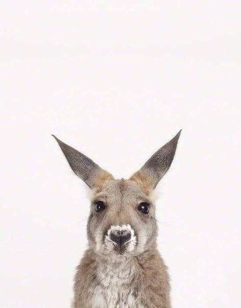 Як би виглядали дикі тварини на фото у паспорті - фото 4