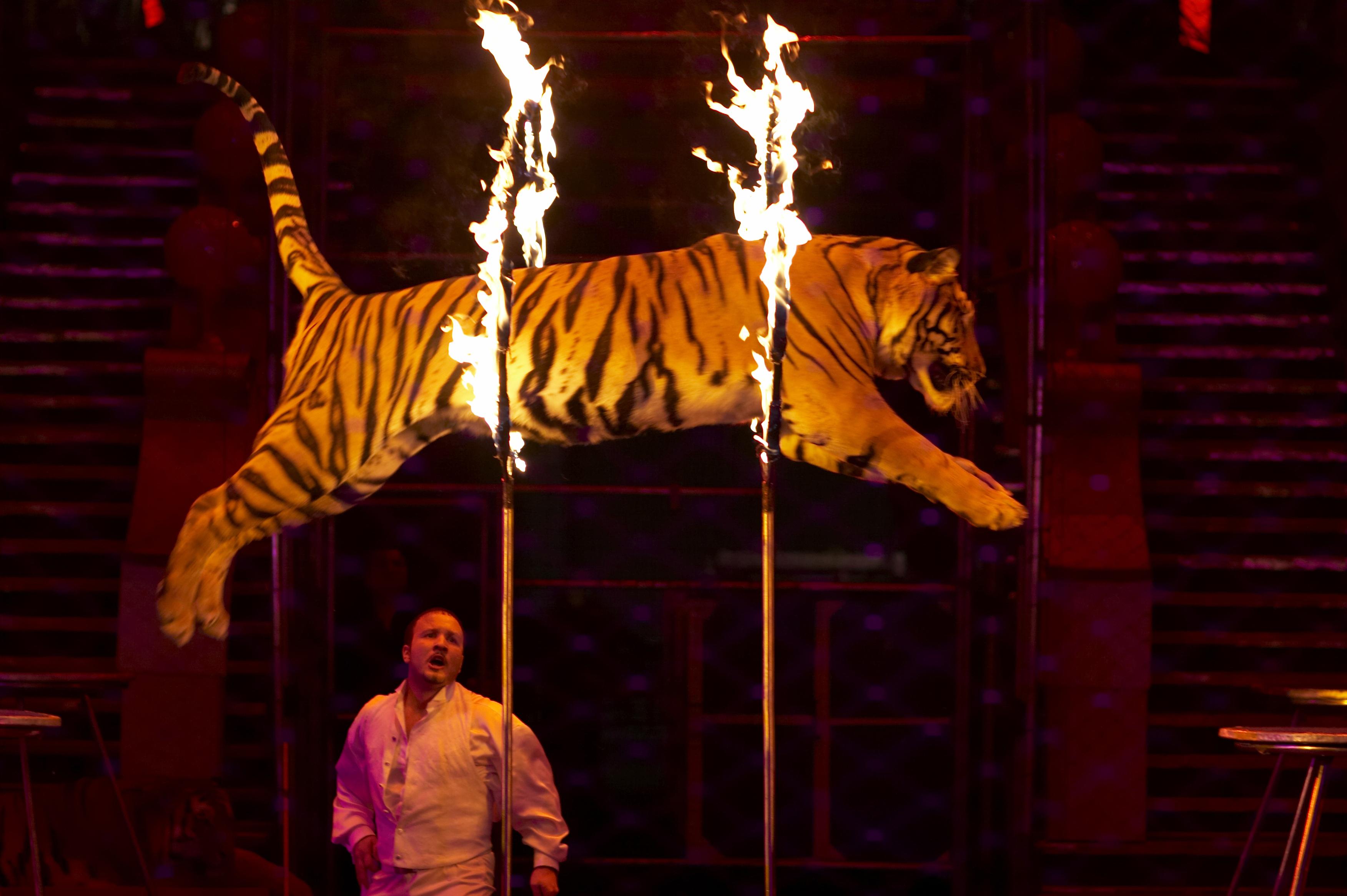 Українців закликають відмовитися від цирків із тваринами - фото 1