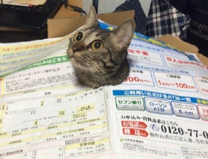 Як виглядає котячий спокій та паніка в одну мить - фото 1