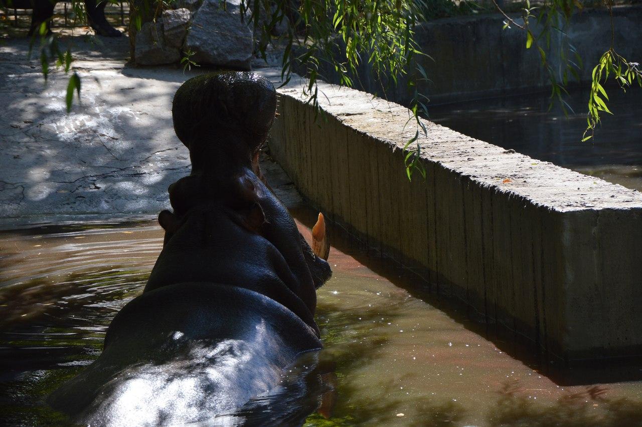 Як звірі у Миколаївському зоопарку поздоровляли городян з Днем міста - фото 4