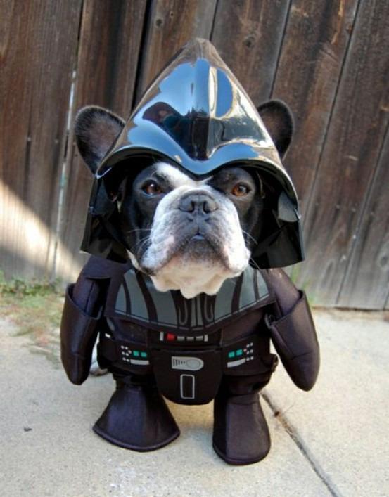 Зоряні війни: як виглядають мімішні тварини в костюмах героїв саги - фото 1