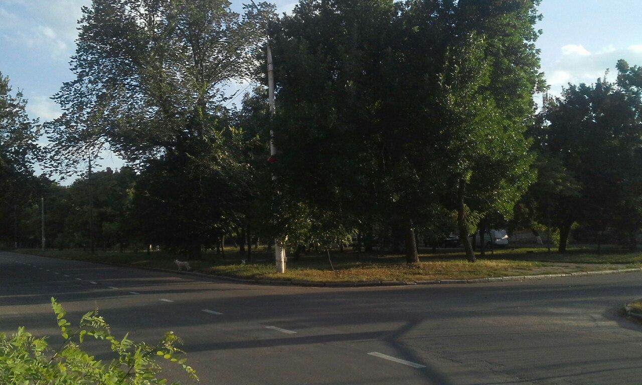 У Миколаєві ліани заплели дорожні знаки - фото 1