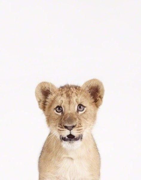 Як би виглядали дикі тварини на фото у паспорті - фото 3