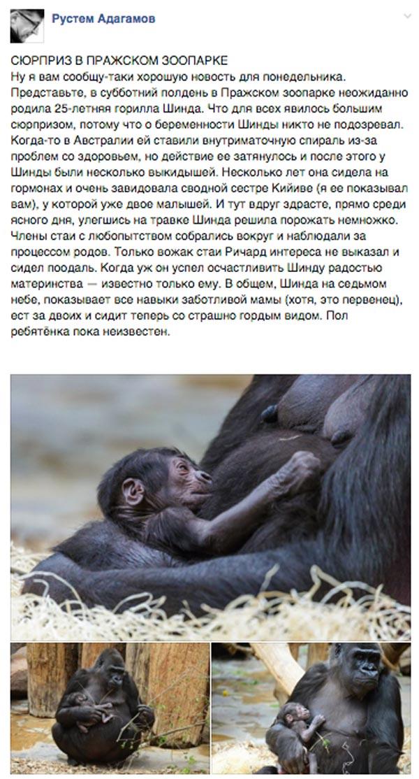 Ківа-стайл та де купити донецько-луганський словник - фото 11