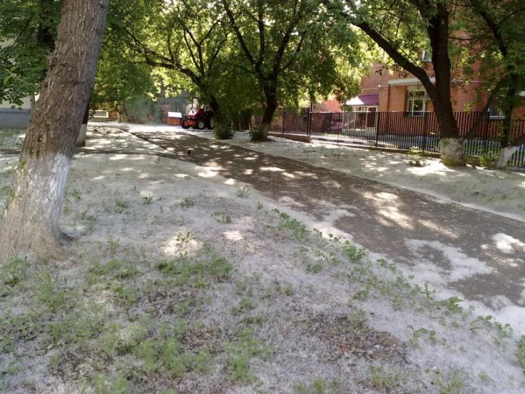 Миколаївці вимагають заборонити озеленювати місто алергічними тополями - фото 1