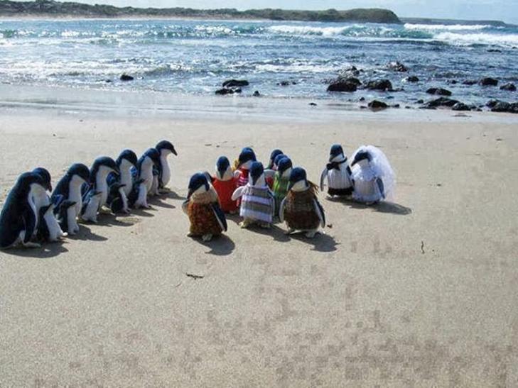 30 дивних і кумедних пляжних фотографій - фото 28