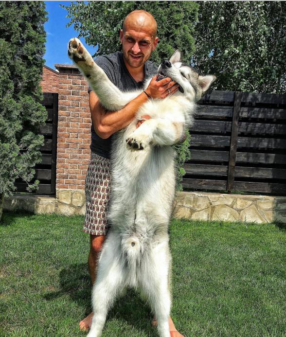 Як Ракицький обіймався зі своїм псом - фото 1