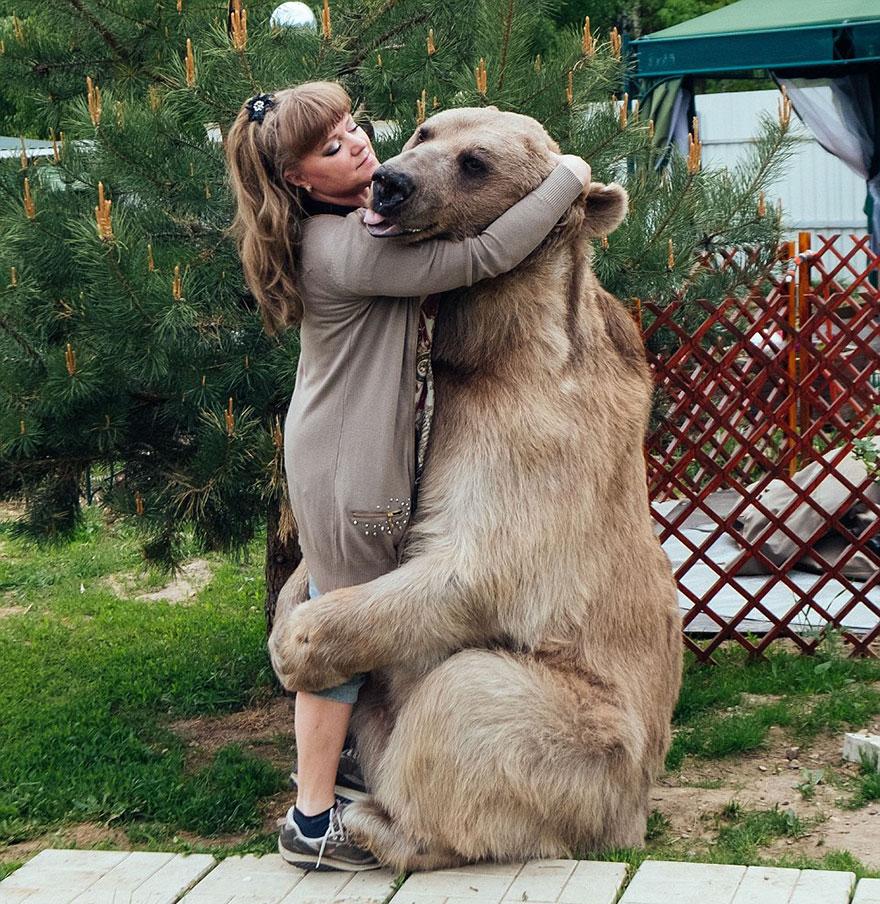 Як ведмідь розкошує в будинку у Москві - фото 4