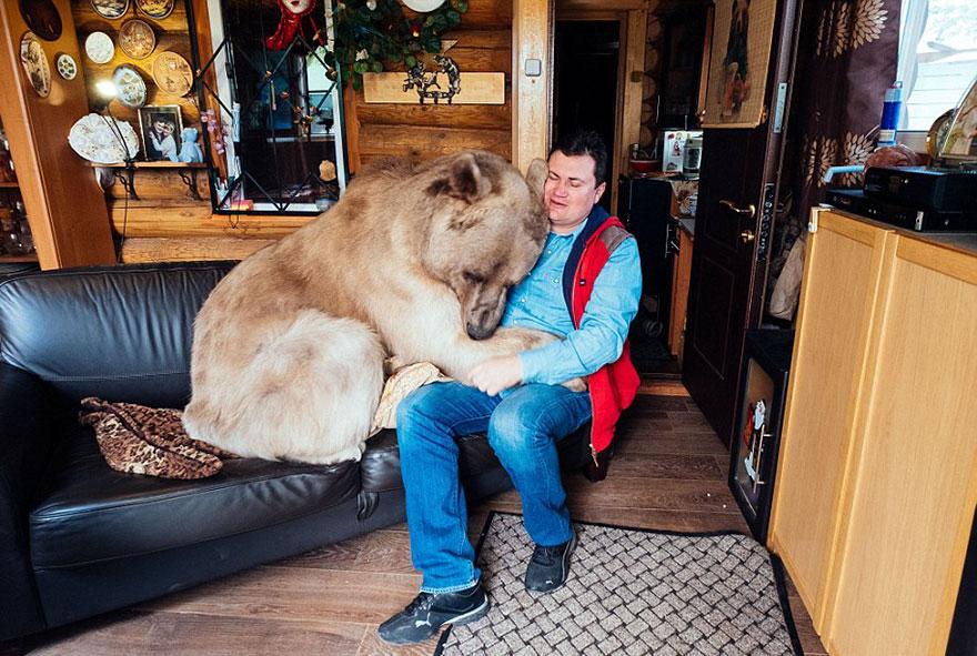 Як ведмідь розкошує в будинку у Москві - фото 3