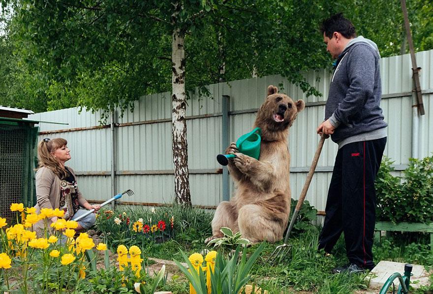 Як ведмідь розкошує в будинку у Москві - фото 1