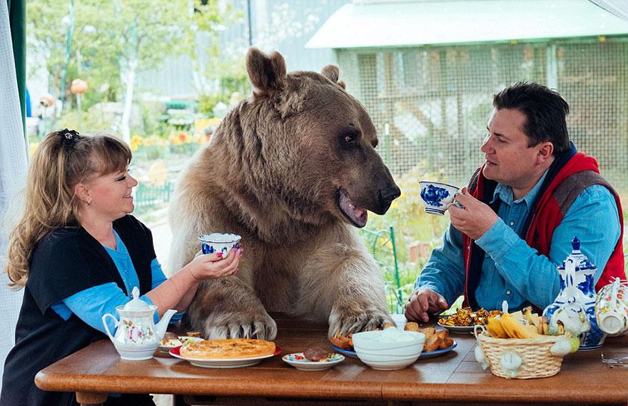 Як ведмідь розкошує в будинку у Москві - фото 5