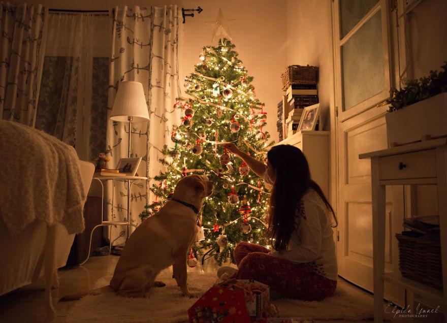 Як виглядає Різдво з милим лабрадором  - фото 10