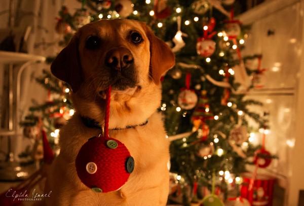 ТОП-20 фото, які створять вам новорічний настрій - фото 8