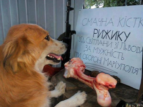 Чим займаються на Донбасі найкращі друзі бійців АТО - 2 - фото 1