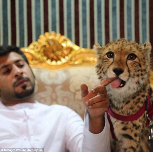 Як багатії мучать левів, тигрів і гепардів у сумках і на диванах - фото 5