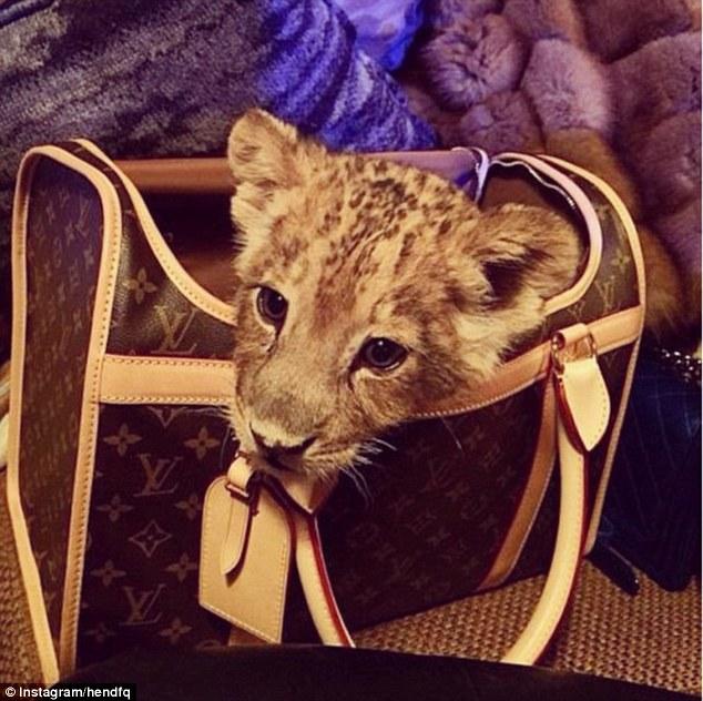 Як багатії мучать левів, тигрів і гепардів у сумках і на диванах - фото 4