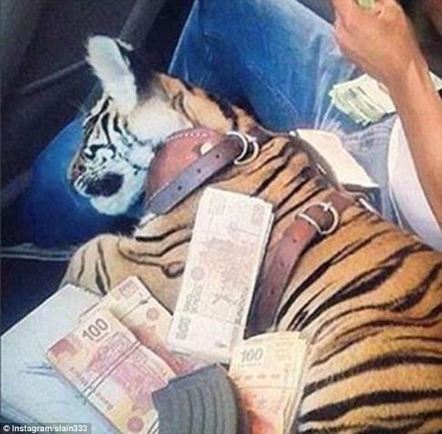 Як багатії мучать левів, тигрів і гепардів у сумках і на диванах - фото 2