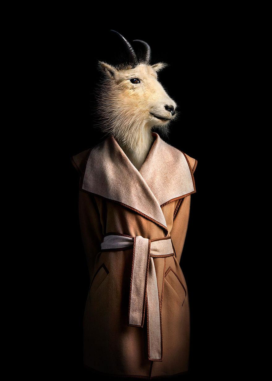 Як виглядали б тварини, якщо носили б одяг  - фото 1
