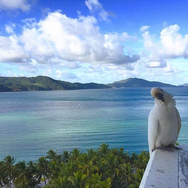 ТОП-7 фото з Австралії, які надихнуть на добро і креатив - фото 1