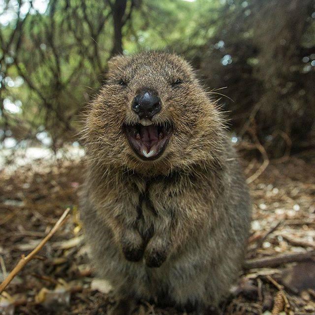 ТОП-7 фото з Австралії, які надихнуть на добро і креатив - фото 6