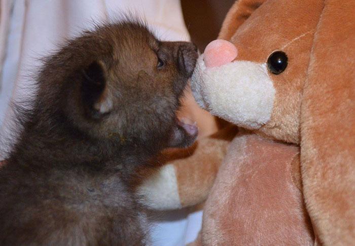 Як лисеня закохалося у плюшевого кролика - фото 3