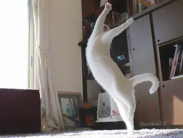 Білий кіт, який танцює балет, поки ніхто не бачить, підірвав мережу  - фото 5