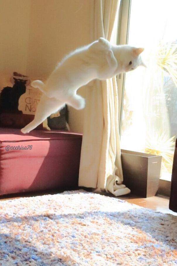 Білий кіт, який танцює балет, поки ніхто не бачить, підірвав мережу  - фото 3
