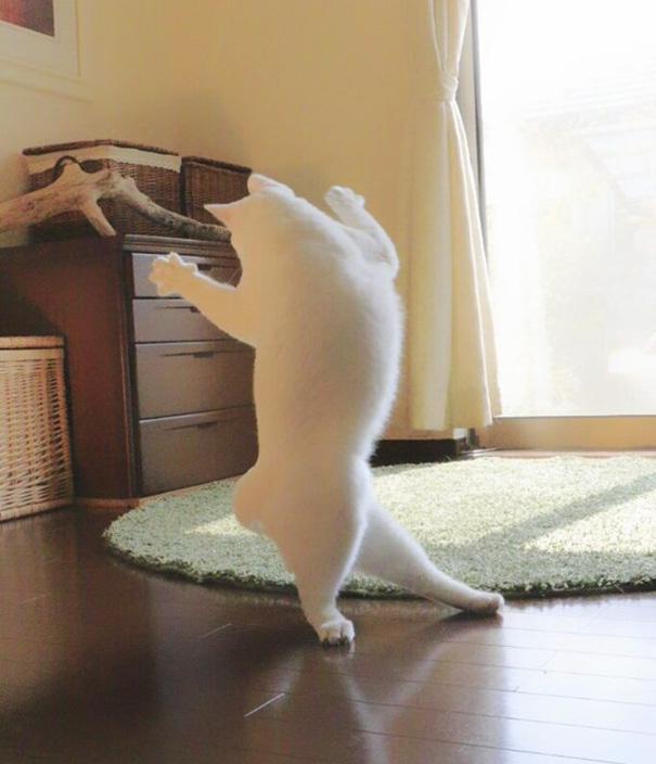Білий кіт, який танцює балет, поки ніхто не бачить, підірвав мережу  - фото 4