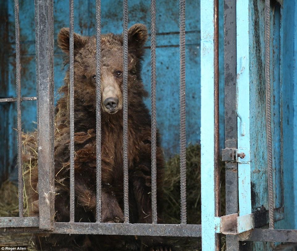 Найсумніший зоопарк: У Гюмрі леви, ведмеді та свинки страждають від голоду - фото 3