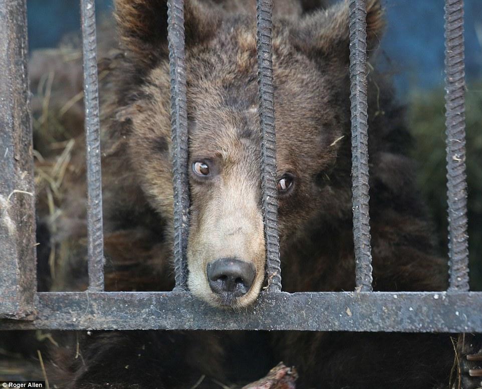Найсумніший зоопарк: У Гюмрі леви, ведмеді та свинки страждають від голоду - фото 5