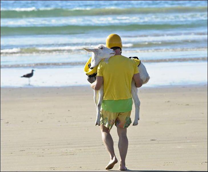 30 дивних і кумедних пляжних фотографій (Частина 2) - фото 25