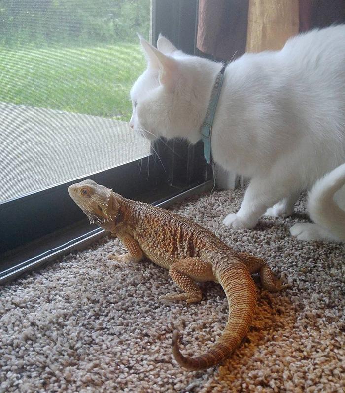 Як кіт і ящірка стали найкращими друзями - фото 4