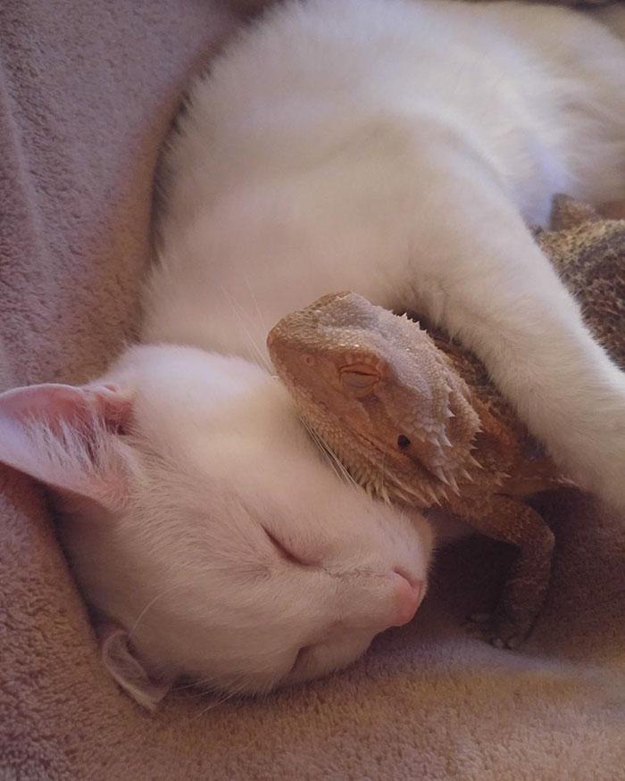 Як кіт і ящірка стали найкращими друзями - фото 3