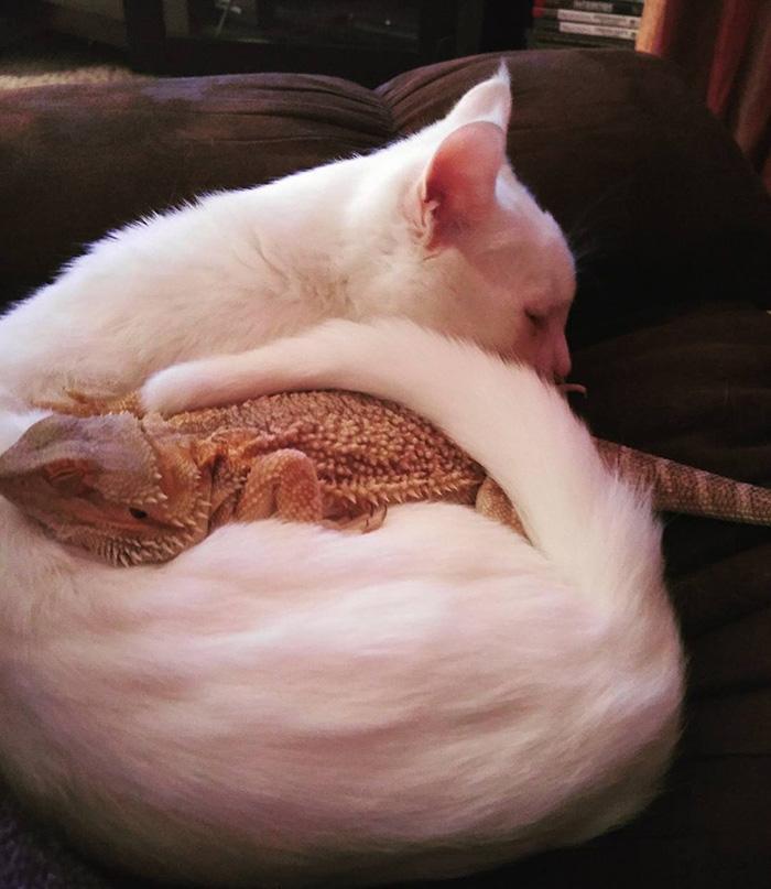 Як кіт і ящірка стали найкращими друзями - фото 2