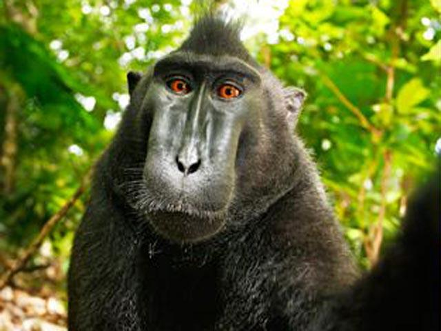 Символи-2016: найвідоміші та найприкольніші мавпи у світі - фото 3