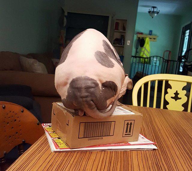 Кіт з обличчям на дупі підірвав Мережу - фото 1