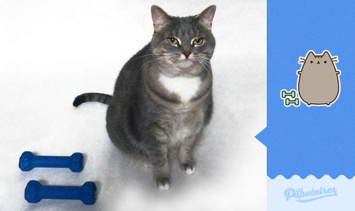 """Як кіт пародіював побратима з """"Фейсбуку"""" - фото 5"""