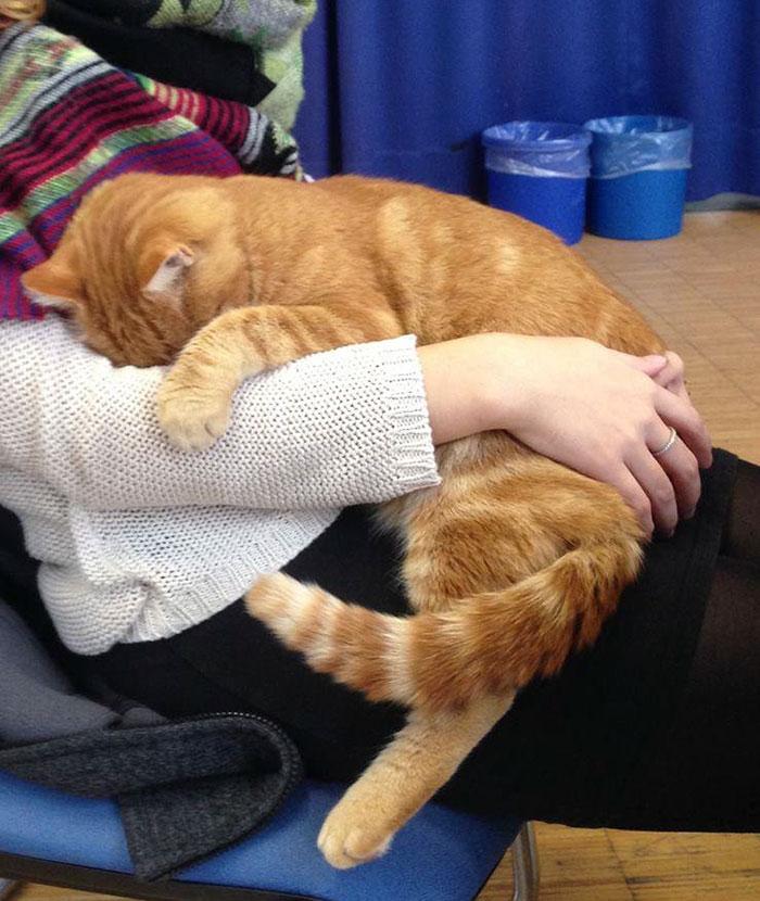 Як кіт допомагає студентам знімати стрес - фото 2