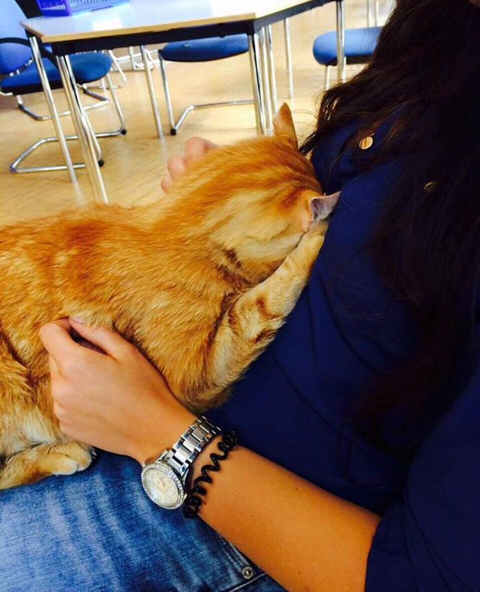 Як кіт допомагає студентам знімати стрес - фото 1