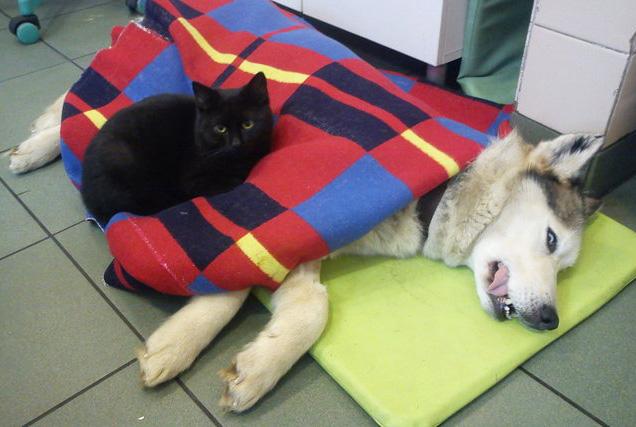 Кіт-фельдшер і кіт-музейник: ТОП-5 вусатих, які не сидять, склавши лапи - фото 11