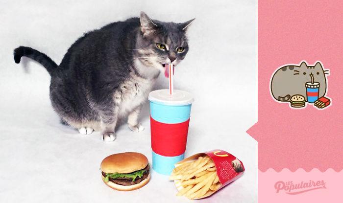 """Як кіт пародіював побратима з """"Фейсбуку"""" - фото 4"""