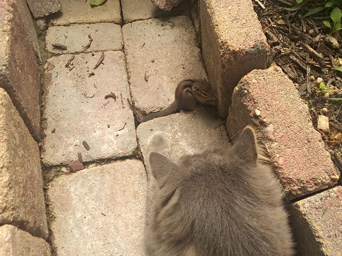 Як кіт з бурундуком подружився - фото 1