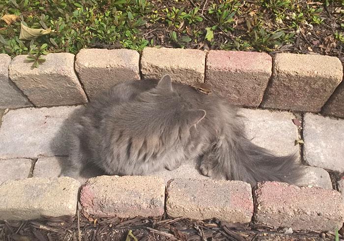 Як кіт з бурундуком подружився - фото 2