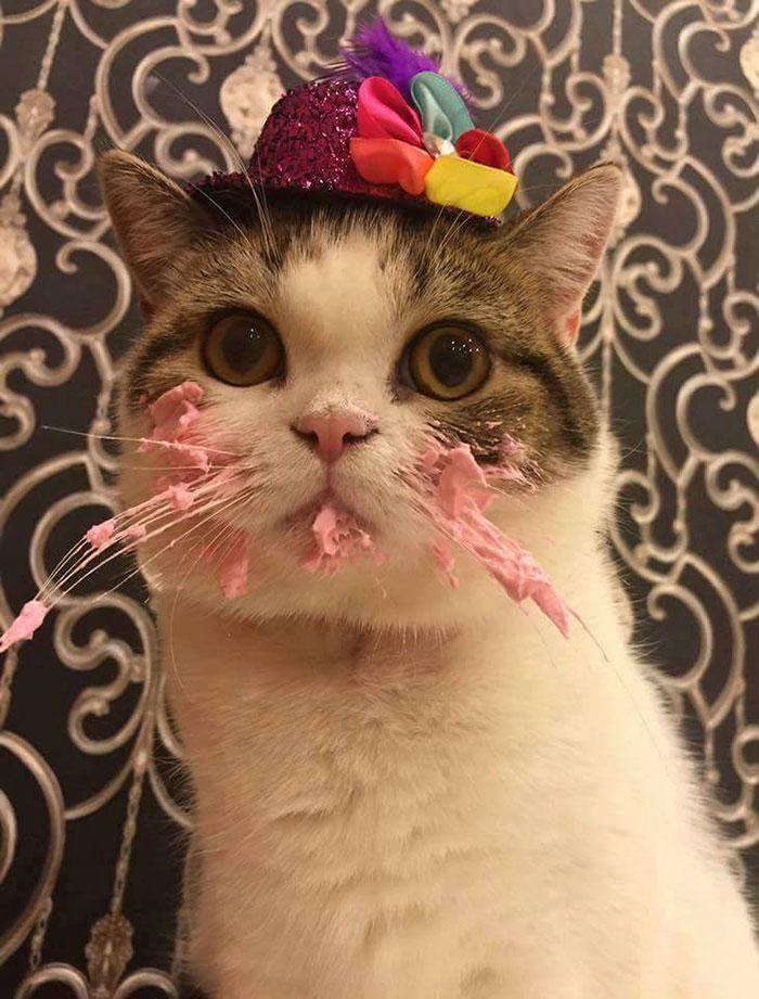 Як милий котик їв іменинний тортик  - фото 1