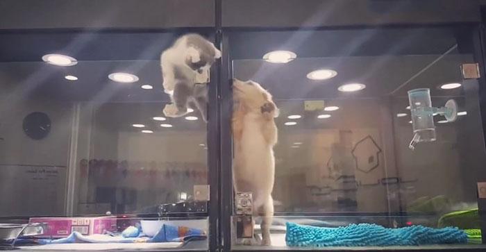 Як сміливе кошеня долало перешкоди, аби погратися з собакою - фото 1
